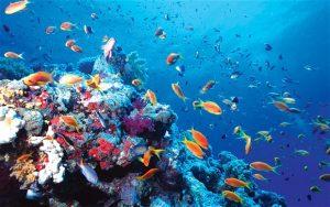 """Momento Cívico y Cartelera """"Día mundial de los Océanos"""""""
